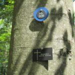 Wald Bild vom Ruheforst Kaiserslautern