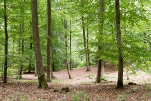 Naturbestattung - Was passiert, wenn ein Sturm den Baum mit meinem gekauften Platz umweht?