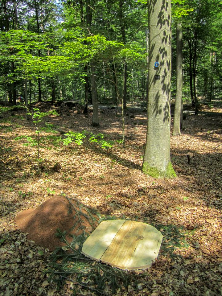 Die letzte Ruhestätte in einem Bestattungswald